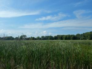 Palustrine wetland